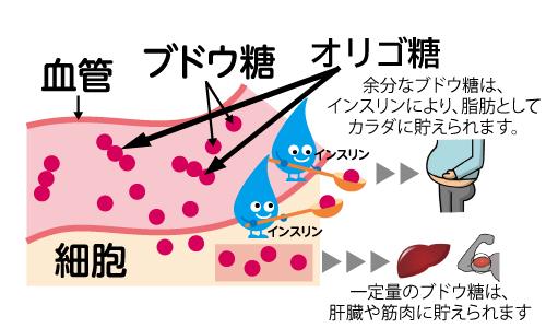 食べた糖質がブドウ糖に分解され、インスリンの働きで中性脂肪として蓄えられます。