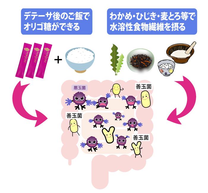 腸内にデテーサと水溶性食物繊維を摂ると